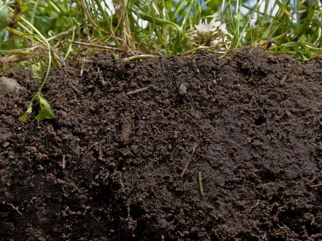 Humuszos talaj