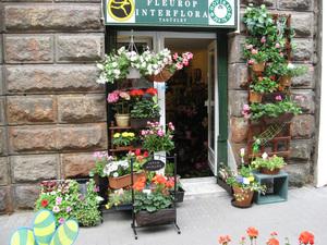 Hóvirág virág üzlet