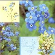 akciós szalvéta virágos szalvéták nefelejcs