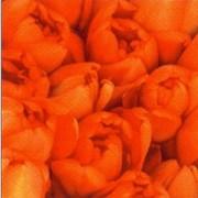 akciós szalvéta húsvéti sorozat tulipán