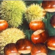 akciós szalvéta zöldségek, termések sorozat gesztenye