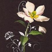 szalvéta virágos szalvéták fehér virág