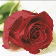 akciós szalvéta virágos szalvéták vörös illatos