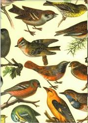 Tassotti dekupázs papír madár