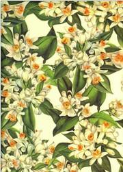 Tassotti dekupázs papír narancsvirág