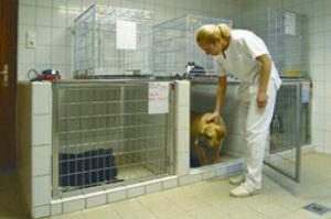 Állatkórházi bentlakás
