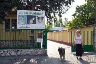 Állatkórházi rendelő