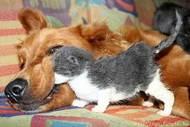 Állatkozmetika