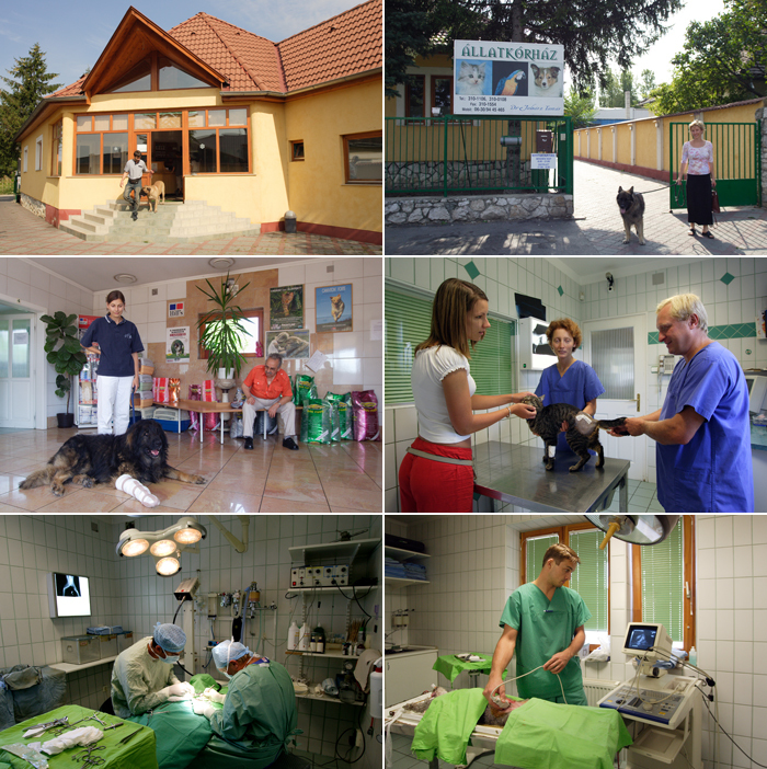 Állatorvosi képsorozat