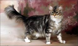 Macskakozmetika