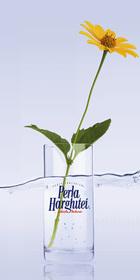 Természetes ásványvíz pohárban