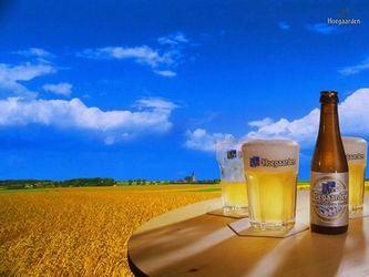belga sör
