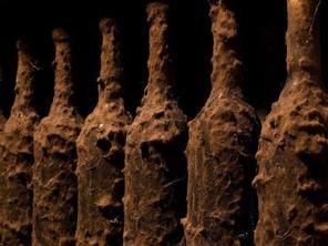tokaji bor - nemespenész