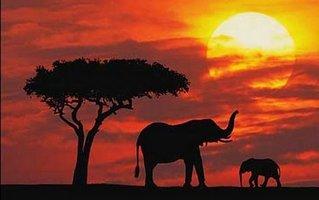 masai szandál