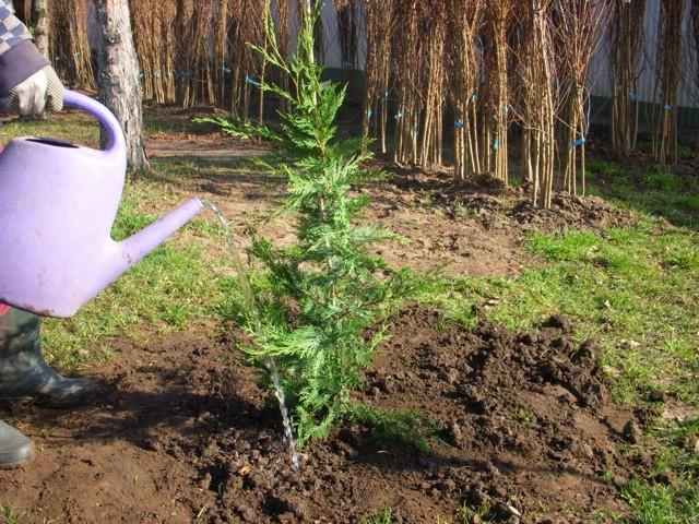 növény beiszapolása