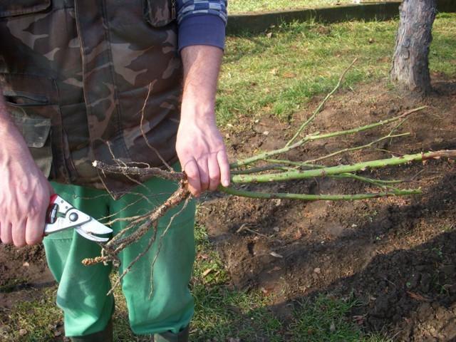 növény előkészítése