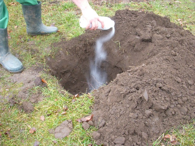 talajfertőtlenítő por kiszórása