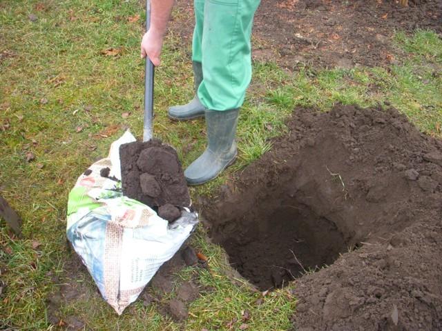 talajjavítás szerves trágyával