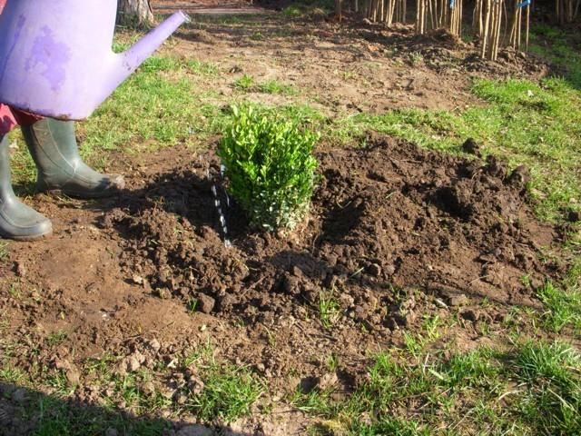 tavaszi ültetésnél öntözőtányér