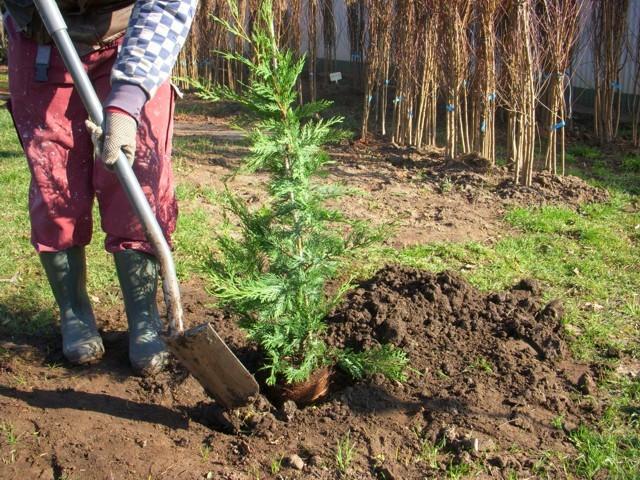 ültetési mélység kialakítása